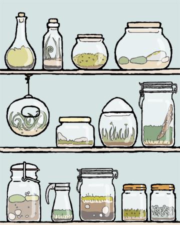 terrarium collection blog