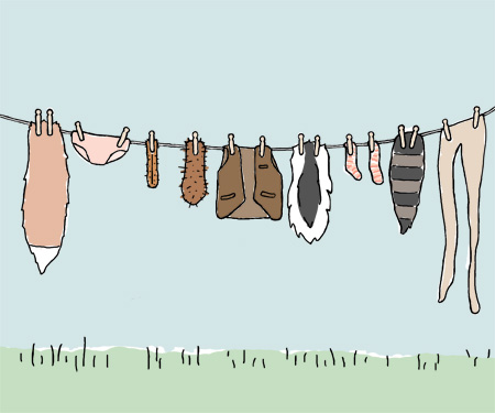 clothesline blog