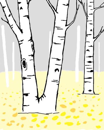 birch blog2