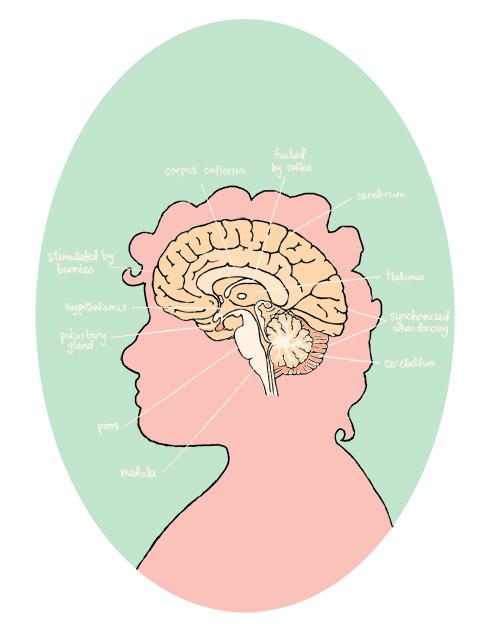brain portrait with labels blog
